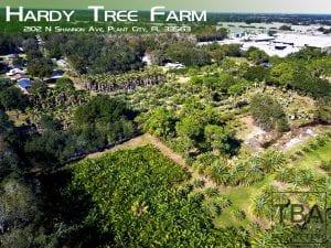 hardy tree farm aerial